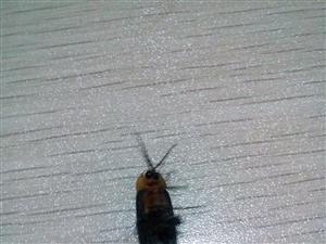 终于看见萤火虫,原来是这个样