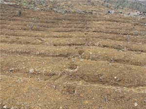 石阡佛顶山再现大型猫科动物活动痕迹