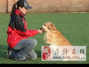 教狗狗握手