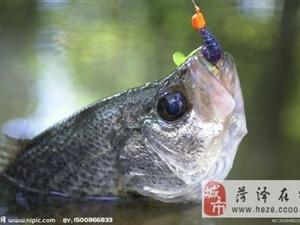 钓什么鱼?用什么钓?
