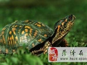 养乌龟也是讲风水的!