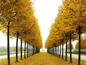 人生没有真正的绝望。树,在秋天放下了落叶,心很疼,可是整个冬天,它让心