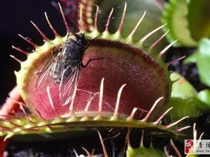 10种世界上最恐怖的植物