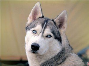 狗狗排名大全――什么样的狗更适合你