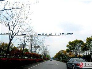 【转帖】上海一马路装50多只探头 惊呆路人