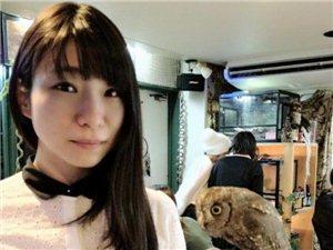 探秘日本猫头鹰咖啡馆 邂逅卖萌高手