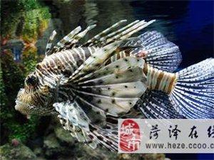 热带鱼的养殖条件