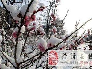 【�D�d】北方的春天,是南�L送�^�淼�