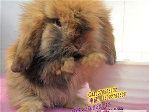 小兔子乖乖!