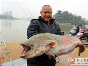碉堡了!湘江衡阳段钓上来一条45斤的大鲶鱼