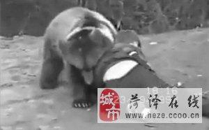 俄罗斯格?#39277;?#20891;与狗熊打成平手  儿时视频走红