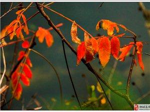观山观水观秋色――龙眠山三号线活动图片欣赏