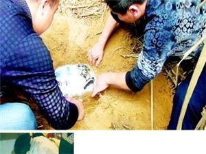 40多名警察架云梯抓捕  兄弟盗窃名贵艺术品