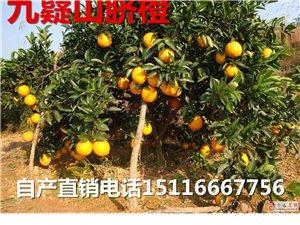 九嶷山自产脐橙,刚下树,超新鲜,欢迎订购15116667756