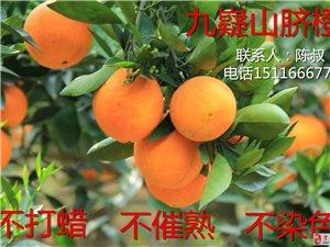 九嶷山自产脐橙下树啦,超新鲜,欢迎各位前来订购