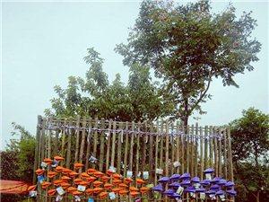 女汉子的户外紫色&橙色婚礼梦,居然实现了,太高兴了