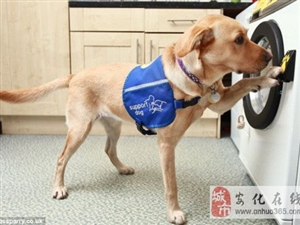 犬用声控洗衣机:聪明狗狗可帮主人洗衣