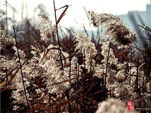 2013-12-01 县城拍摄 乡亲父老轻拍(第二弹)