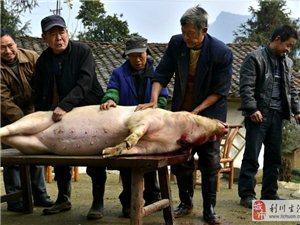 土家族的风俗――-杀年猪