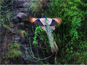 小鸟摄影作品图片精选