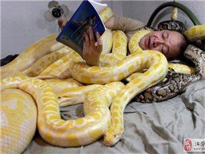 与蛇共眠(图)