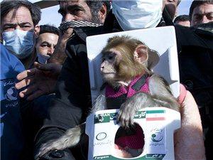 伊朗宣布成功将第二只猴子送往太空