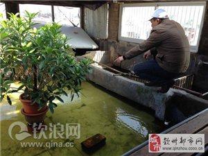 钦州:市值上百万龟苗一夜被盗 养殖户愿出10万元奖励协助破案者