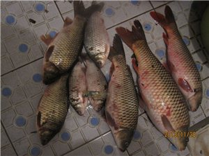 澳门威尼斯人娱乐网站钓鱼群184270743