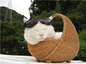 养猫小知识――破除迷信之神秘猫咪大揭秘