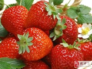 凯里虎庄草莓园冬季大棚草莓好美味!!!