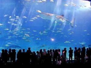绝对被震住的水族馆