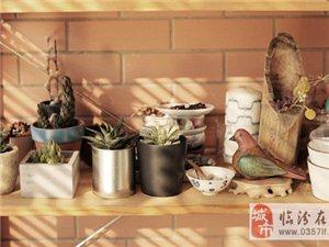 小植物打造清爽自然家居生活