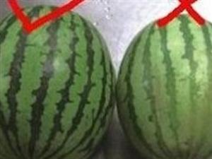 偷着学,水果贩子教你怎么挑好水果!