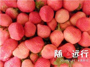 过年送礼还是送奶油草莓