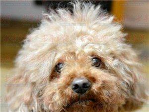 """小狗被偷走两年又神奇回家 主人赞其""""够忠诚"""""""