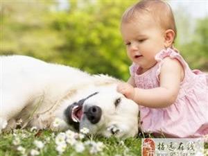 狗狗的世界只有温暖