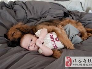 狗狗的世界只有温暖续一