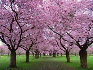 百看不厌的树花与树景 美到让人心碎
