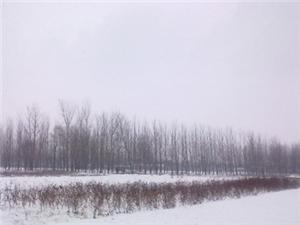 菏泽普降瑞雪有效缓解小麦旱情