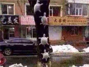 盘点2014年新春下雪,网友堆得得各类奇葩雪人!!!