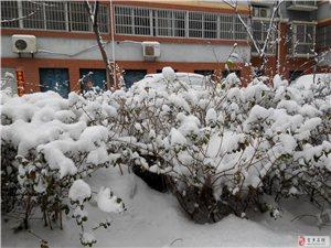 2014年金乡的第一场雪