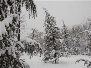 2014年春节后的第一场大雪