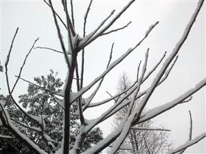 雪景2014