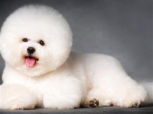 给狗狗照艺术照