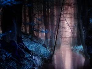 不同色温下的迷雾森林