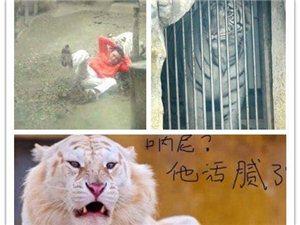 男子跳进虎园吓老虎