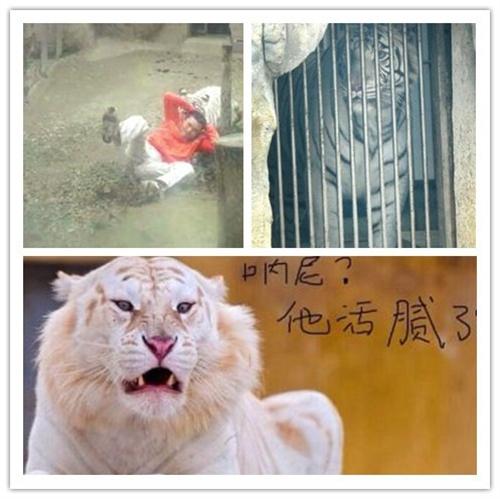 男子跳进虎园吓老虎活腻了?