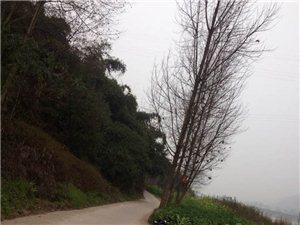 骑行夹江千佛岩对面周柏山