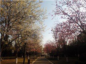 【图片散文】通玄公园美景系列之