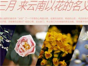 阳春三月 云南花语